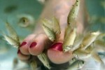 Give Your Feet a Treat at Adol Ya Linawa's Doctor Fish Spa