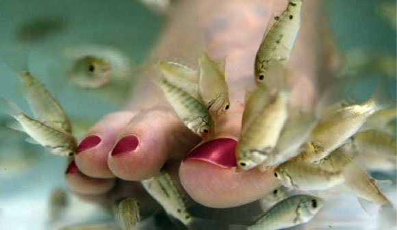 Give your feet a treat at adol ya linawa s doctor fish spa for The fish doctor
